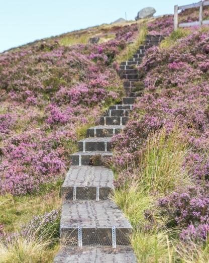 Kopce v Národnom parku Wicklow pokryjú od augusta fialové vresoviská.