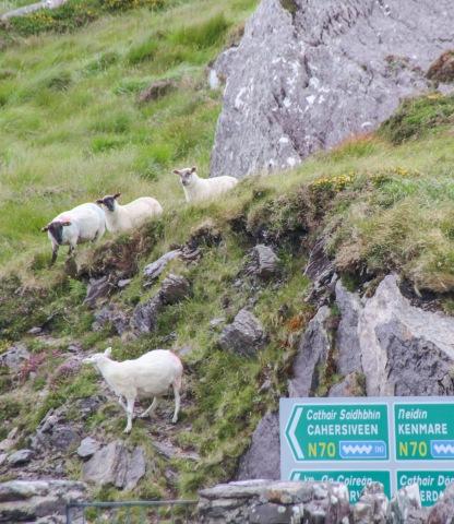 Irsko152