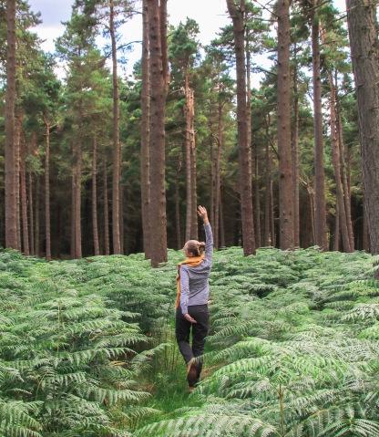 Ballinastoe wood