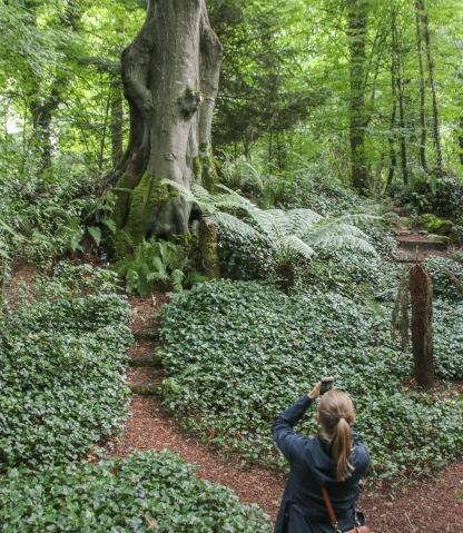 Najstaršie stromy v záhradách Blarney castle.