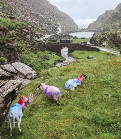 Dúhové ovečky.